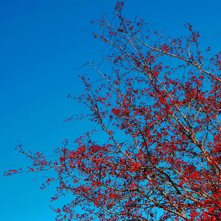 Autumn in Veeland