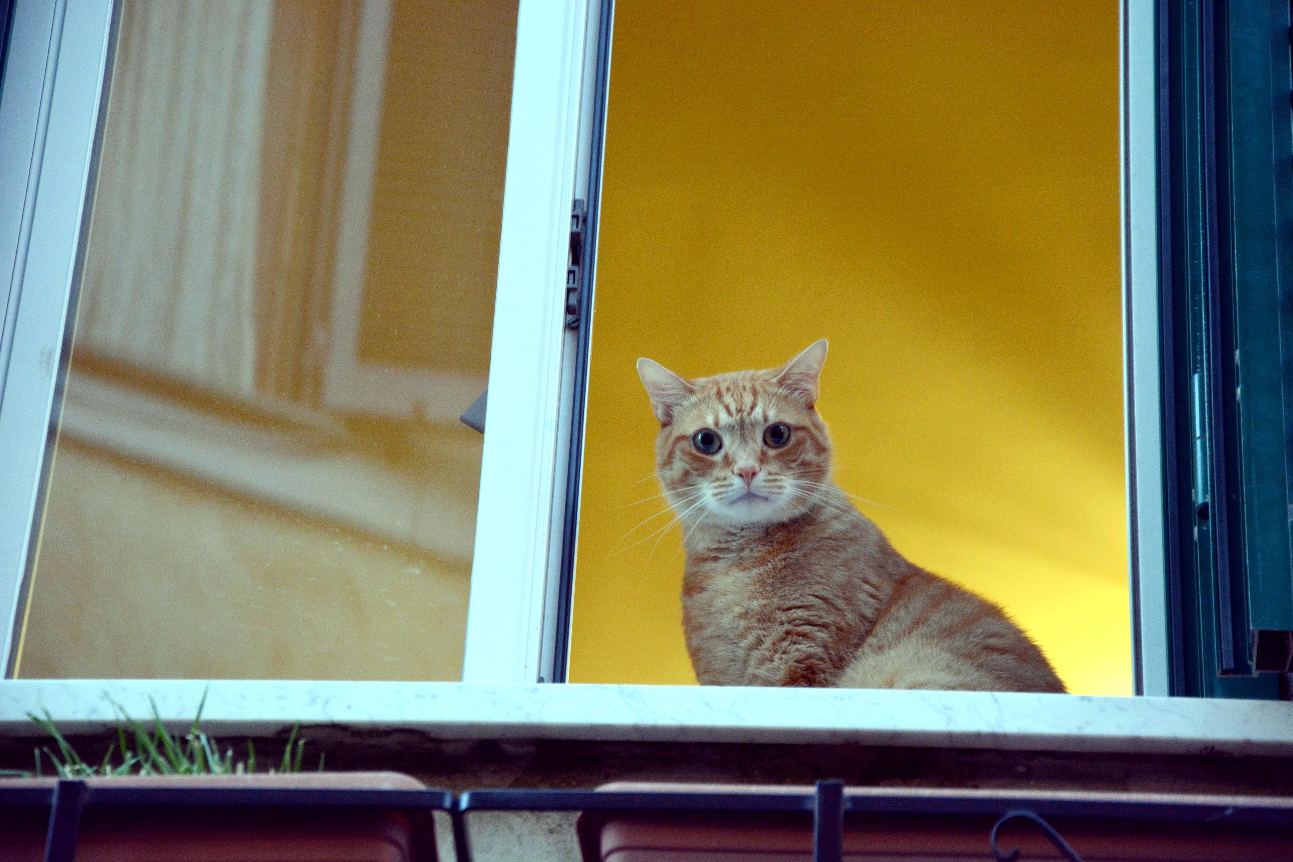 Montecompatri, cat at the window