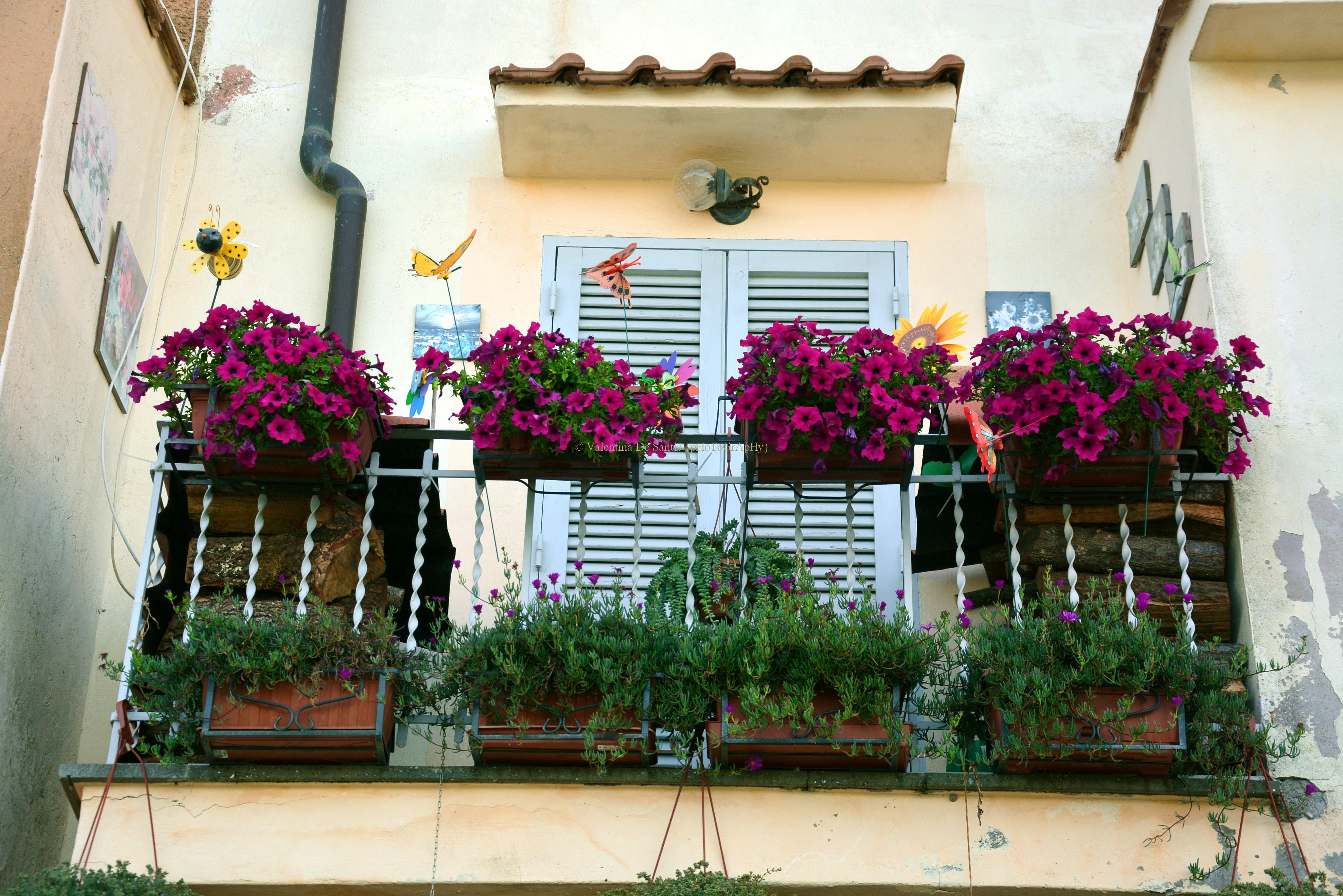 House, Castel Gandolfo