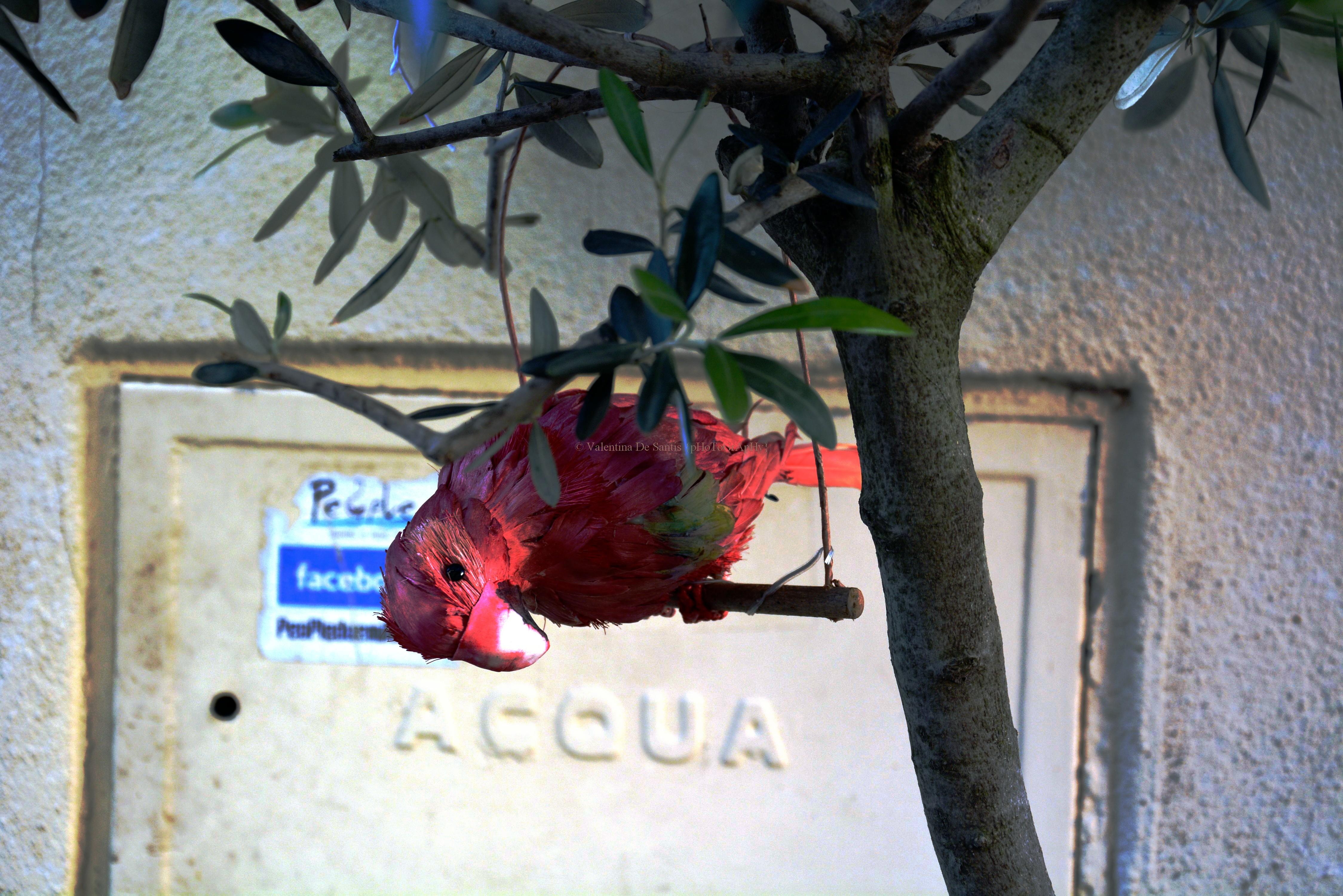 A parrot, Castel Gandolfo