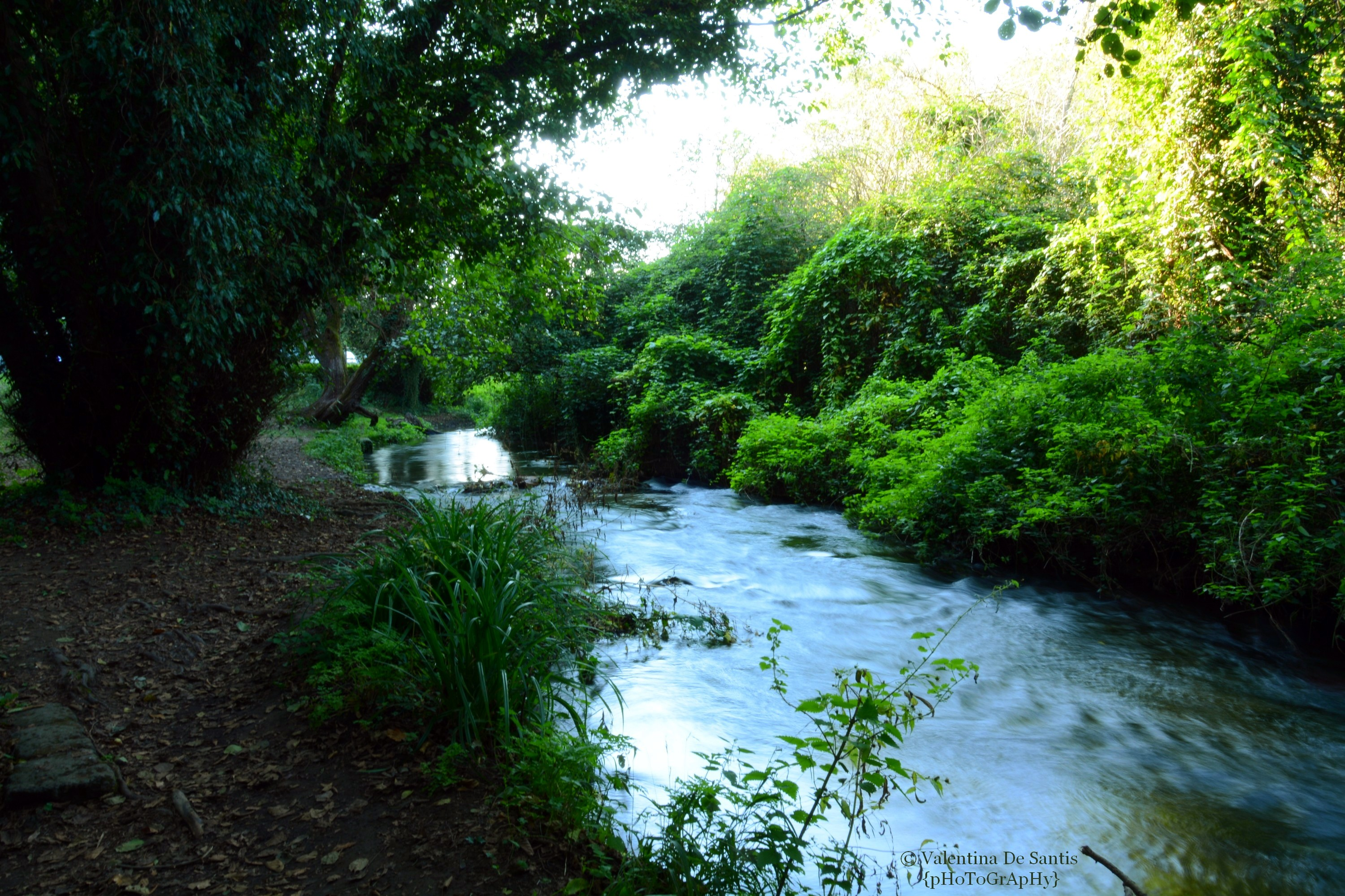 Valley of Treja, the river