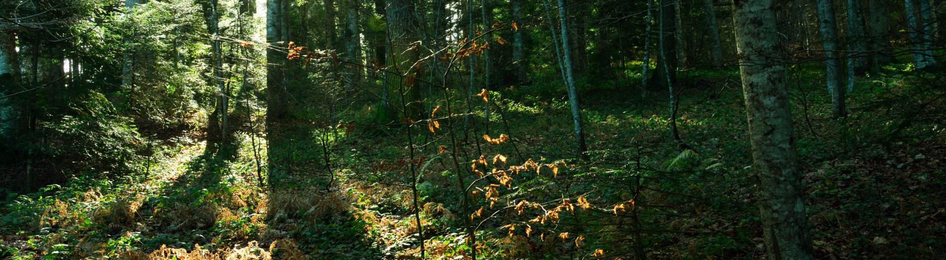 Woods are my Wonderland