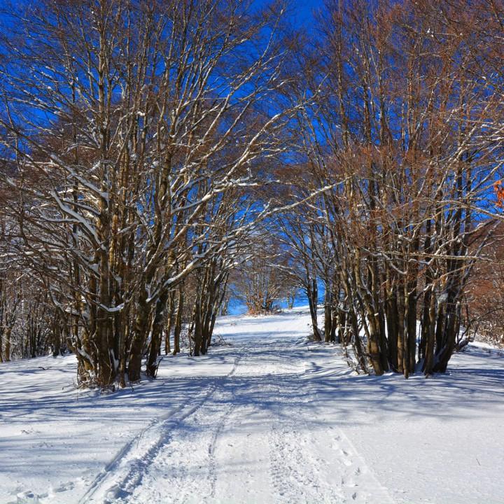 Woods, woods, woods!