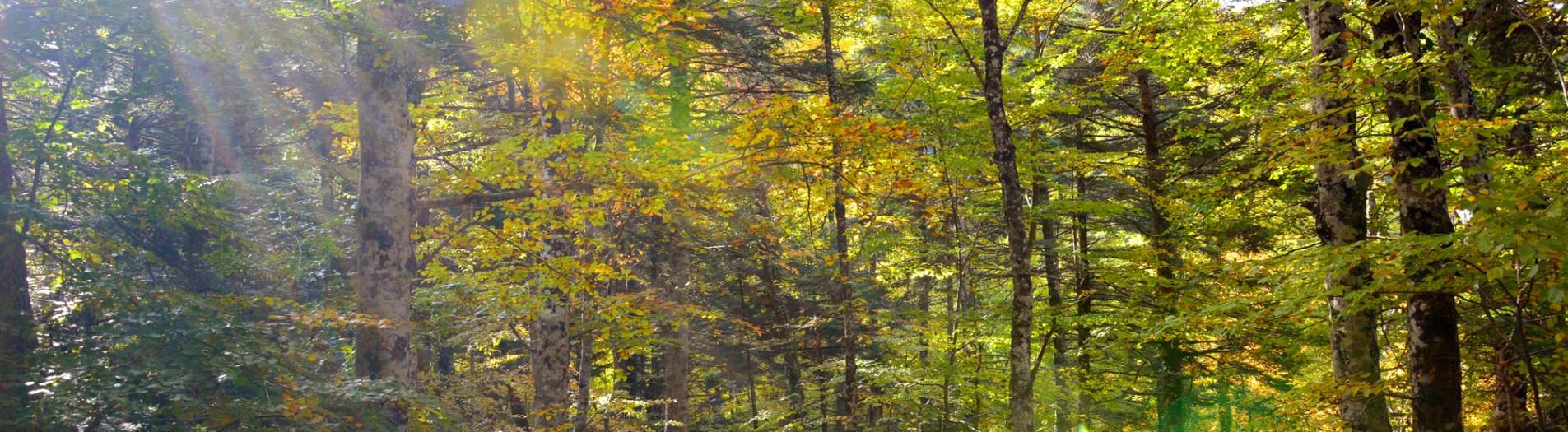 Alto Molise, into the woods
