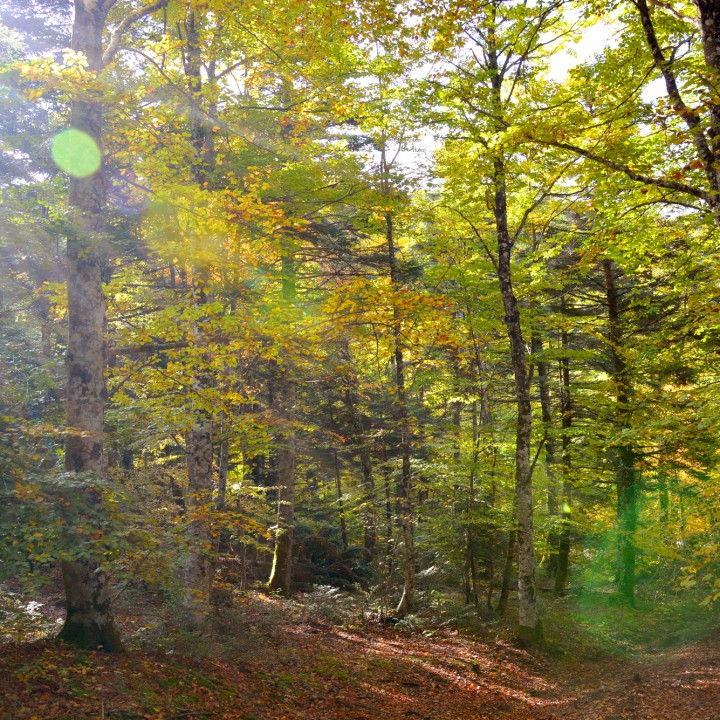 Alto Molise, into the woods