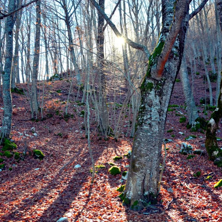 Woods of Abruzzo