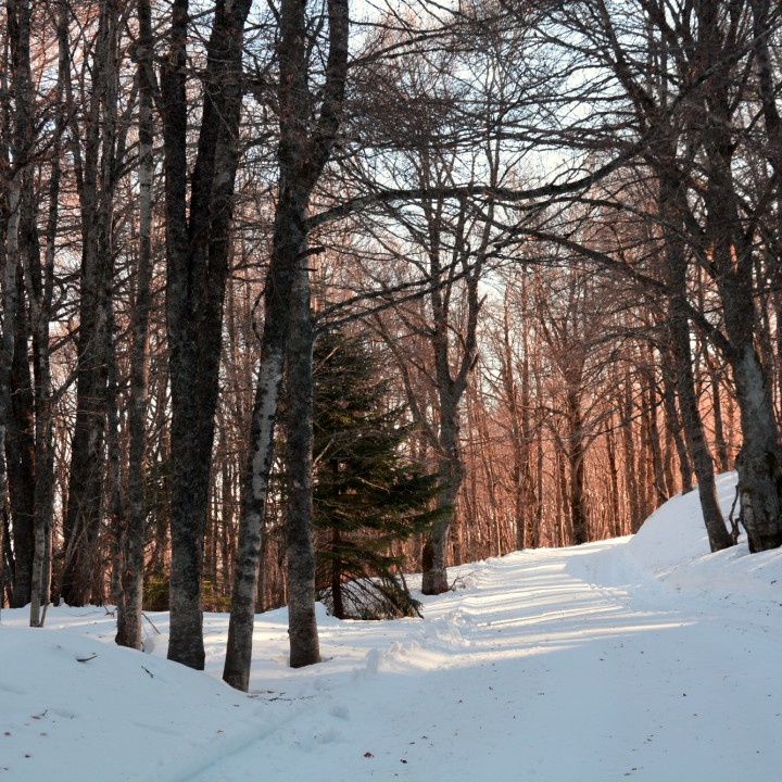 Woods in my winterland