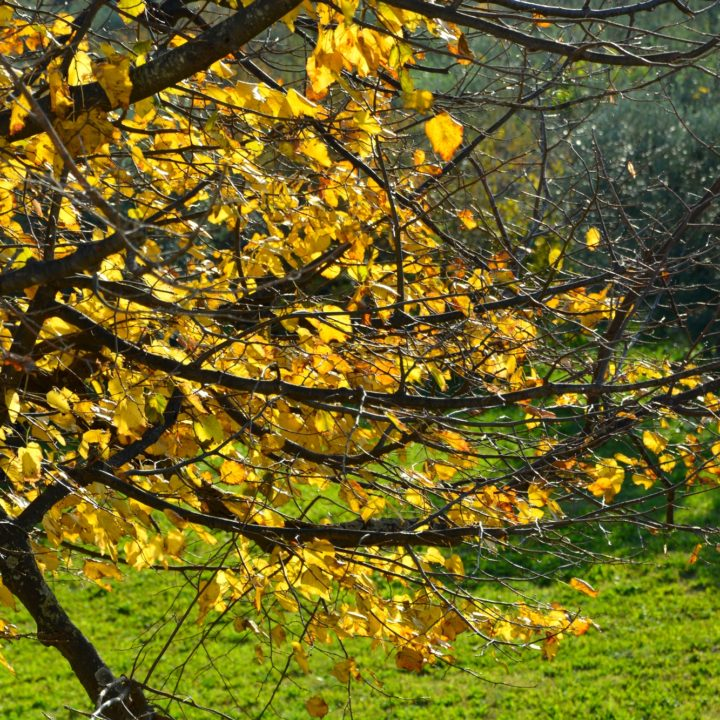 Autumn in Casale del Gelso